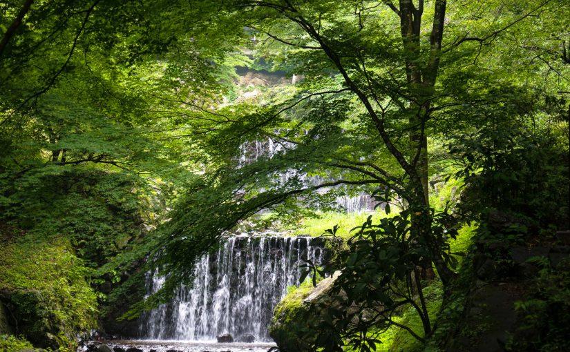 新緑のシャワーを浴びよう!森林浴の効果・樹の香り・樹木の種類